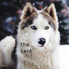 Puikus Zmogus The_Kent - last post by The_Kent
