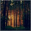 """Apie naują serverio """"lo... - last post by Tautvydas_Giraitis"""