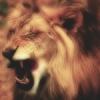 Madd_Lion