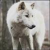 Karolis_Shady